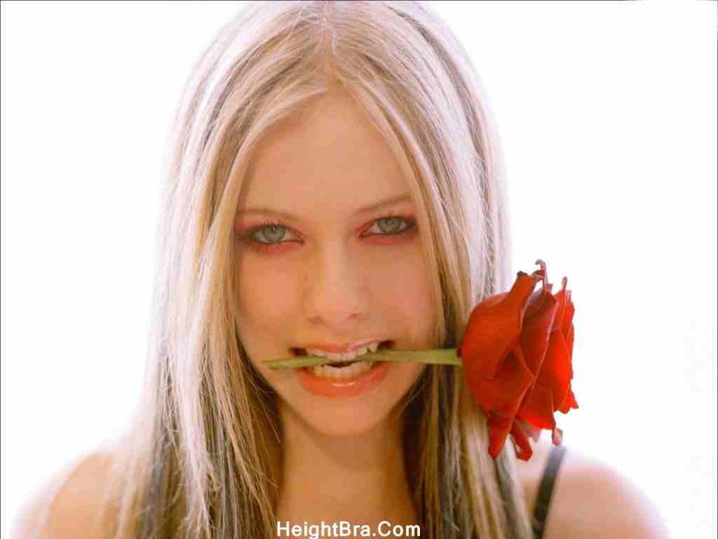 Avril Lavigne Rose